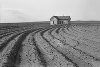dorothea-lange-tractored-out-1936